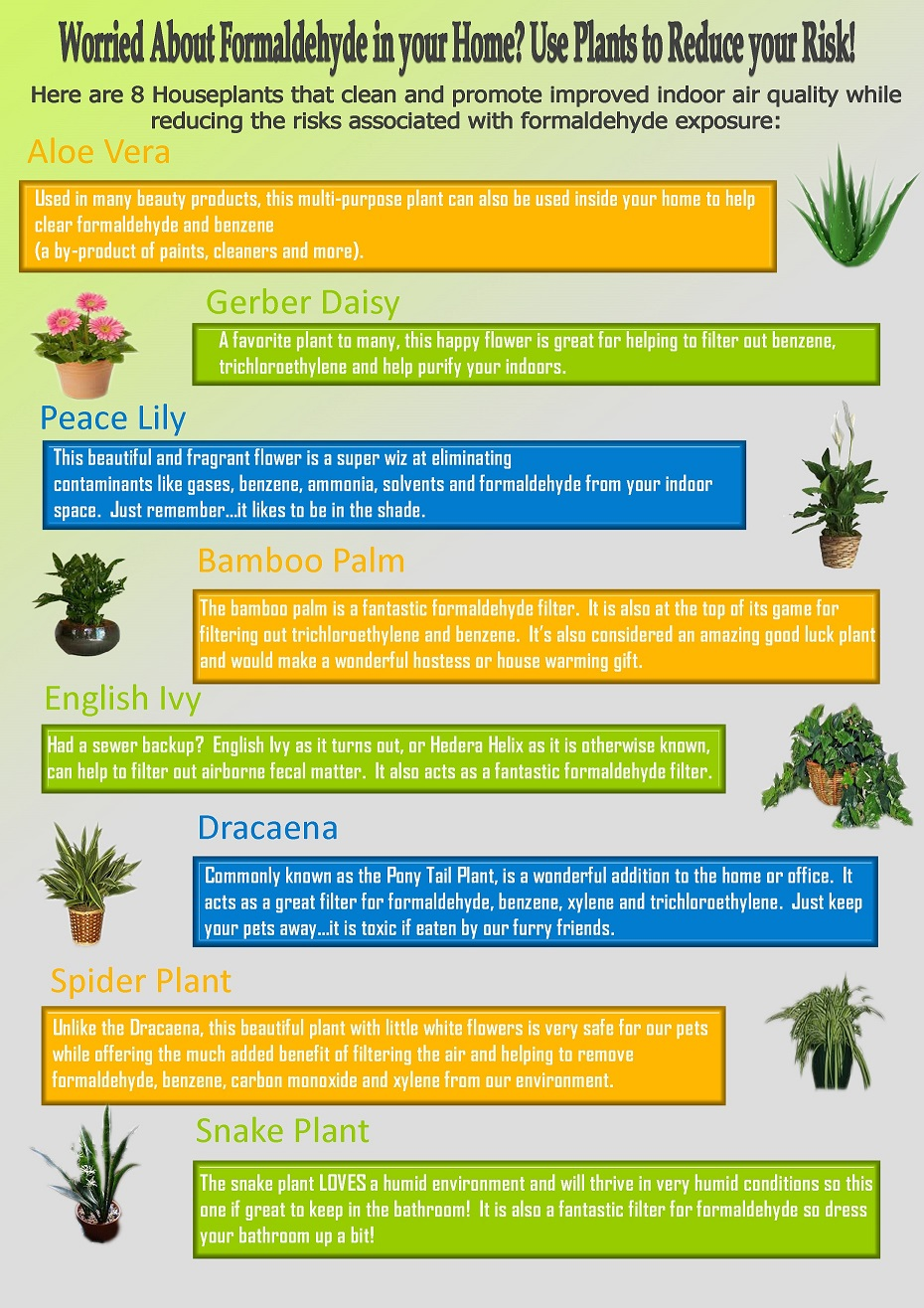 Formaldehyde In Your Home Use Plants To Reduce Risk Share This