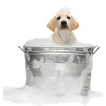 Tips to improve indoor air quality